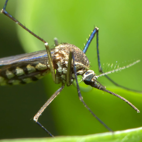 mosquito treatment in Fairfax